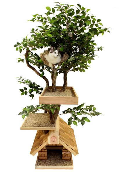 Indoor cat tree, $1099. Not gonna fork that out for our old man but it's one I'd put inside for sure