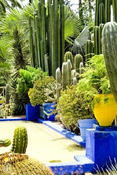 Cactus Garden Ideas cactus garden landscaping cactus garden ideas dawn and marco let us come see their cactus Find This Pin And More On Endless Succulent Ideas Ysls Majorelle Gardens Cactus Haven