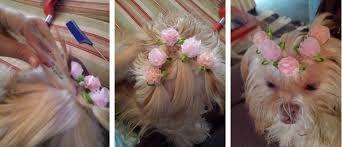 Resultado de imagem para penteados tranças para poodles