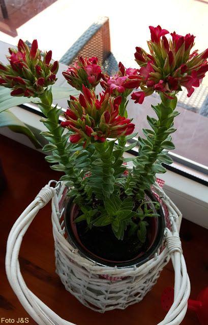 Kwiaty w domu i ogrodzie: Na parapecie!