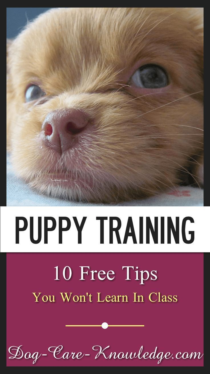 10 Free Puppy Training Tips You Won T Learn In Class Dogs