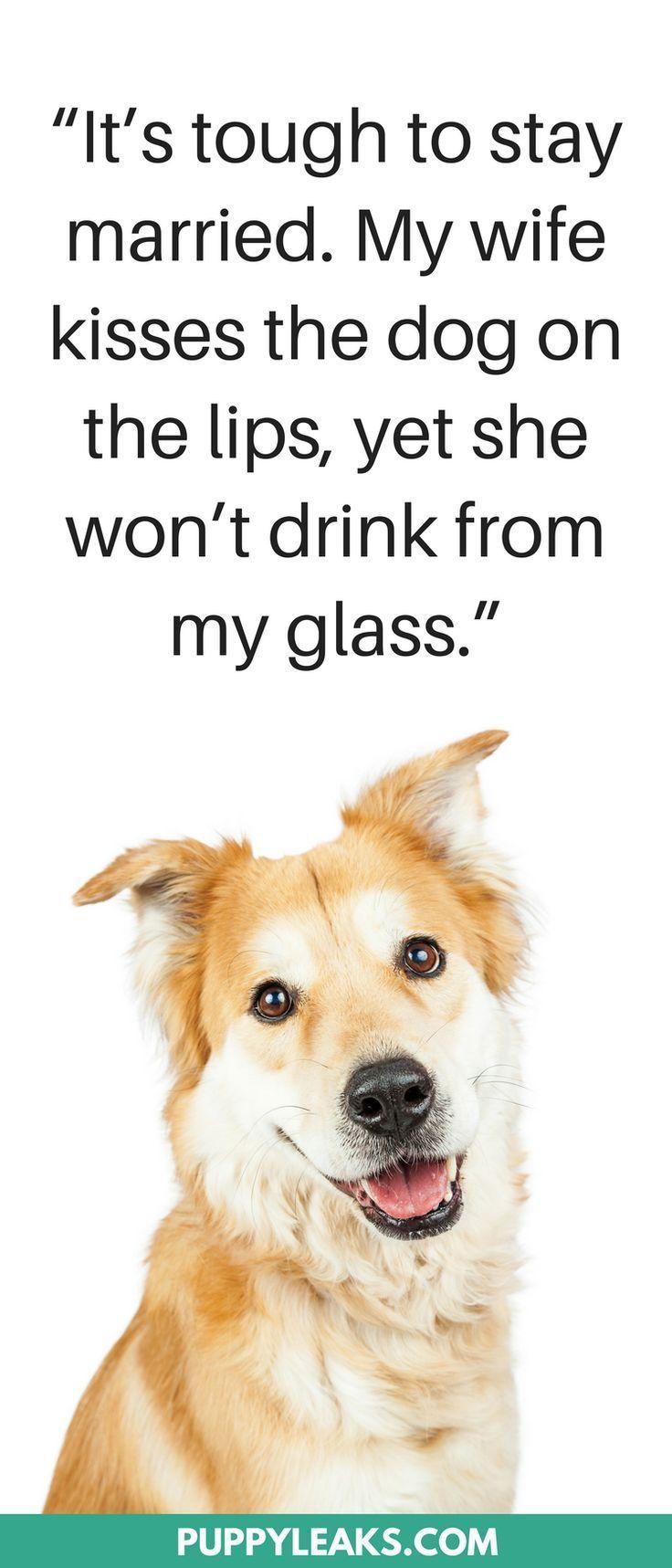 30 Cute Funny Dog Quotes Dog Quotes Funny Dog Quotes Cute