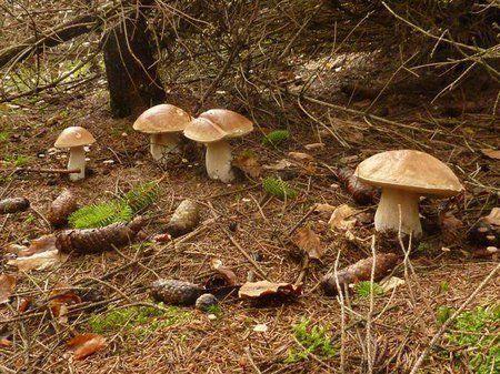 Výsledok vyhľadávania obrázkov pre dopyt huby v lese