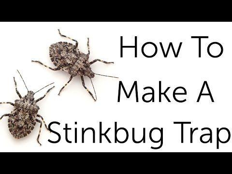 Stink Bug Control: How To Get Rid Of Stink Bugs