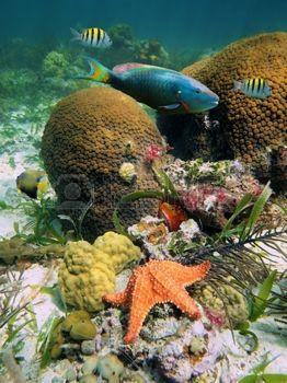 Corail dur avec des poissons tropicaux multicolores et une �toile de mer photo