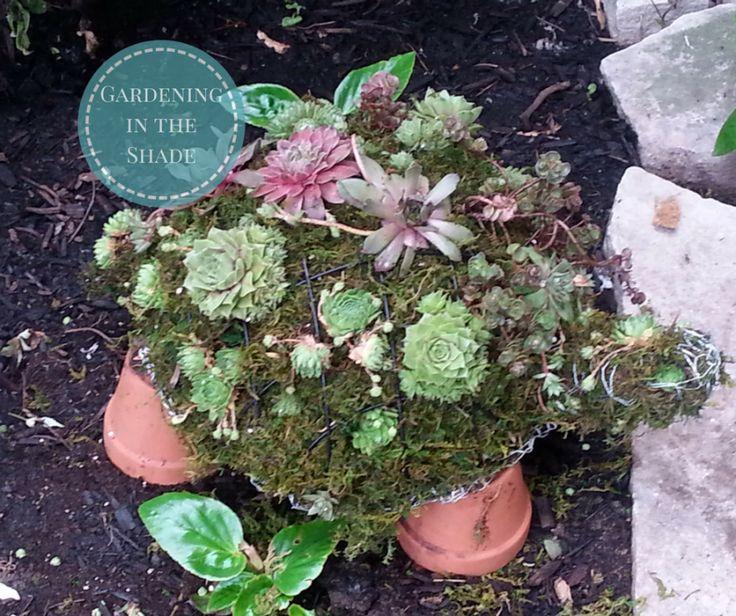http://www.gardeningintheshade.com/2016/06/21/succulent-turtle-topiary/