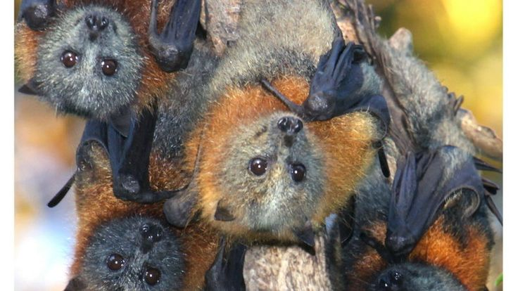 Petition · Stop harming Flying-foxes and their habitats. · Change.org
