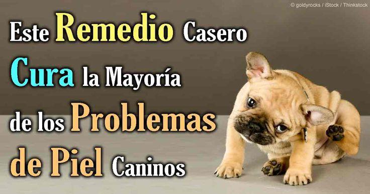 Los problemas de la piel en perros pueden ser tratados y desinfectados fácilmente con el uso de povidona yodada. http://mascotas.mercola.com/sitios/mascotas/archivo/2014/04/03/como-tratar-la-infeccion-de-piel-de-su-mascota.aspx