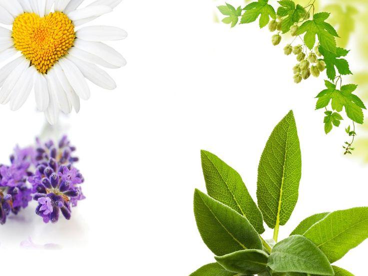 Aromatherapie und ätherische Öle - Einige Beispiele, bei welchen Beschwerden sie helfen können