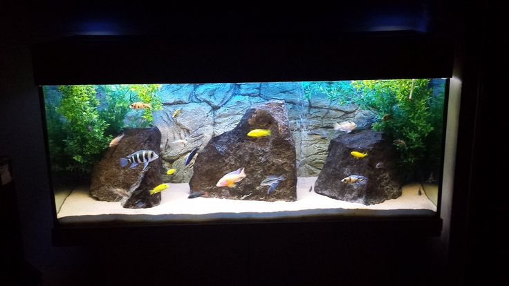 Grey thin background plus couple of natural rocks the for Thin fish tank