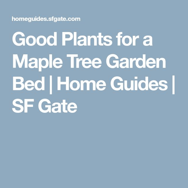 Good Plants for a Maple Tree Garden Bed | Home Guides | SF Gate