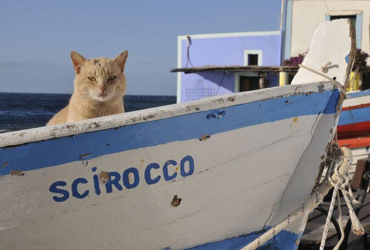 Scirocco con Gatto, Filicudi, Aeolian Islands | Dario via Flickr