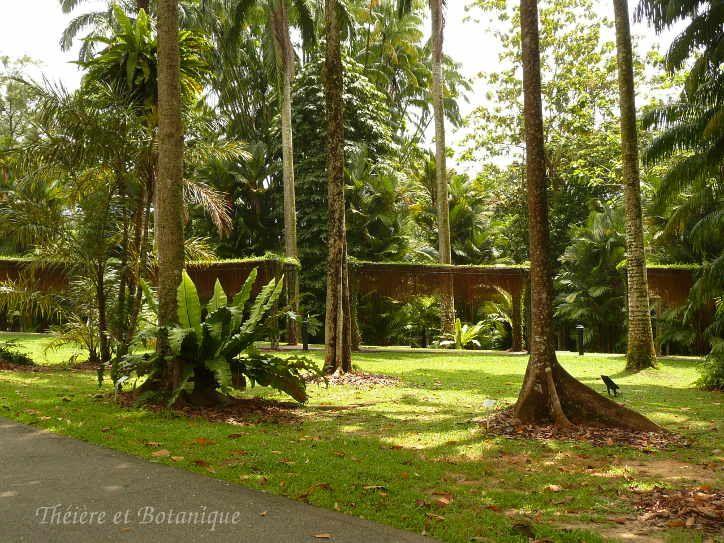 Les 66 meilleures images propos de jardins et voyages for Jardin botanique singapour