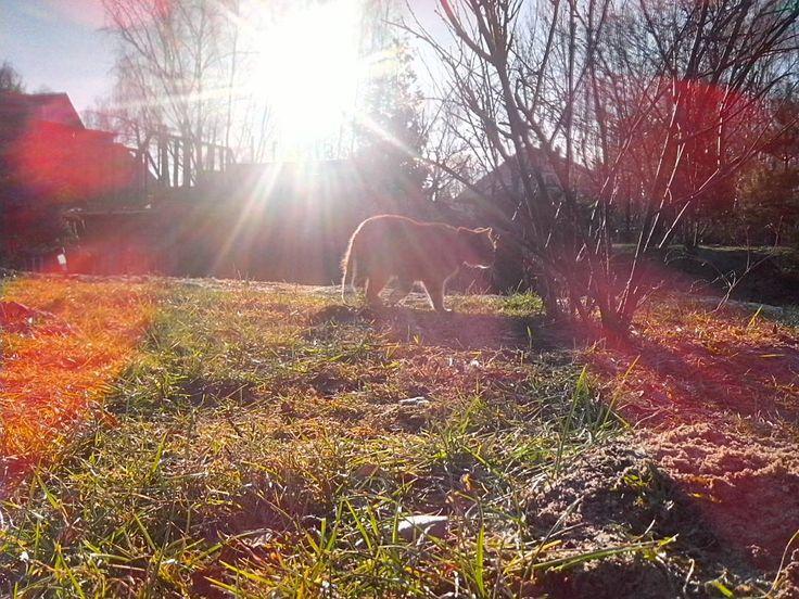""" . . . . . . . . #friday #sunny #day #january #cat #gingercat #miedzyborow #mazowieckie #poland #instacat #cattime #freetime #bluesky #springday…"""