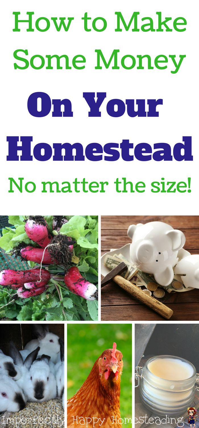 How to Make Some Money On Your Homestead - No Matter the Size. Homesteading profits for even backyard farmers.