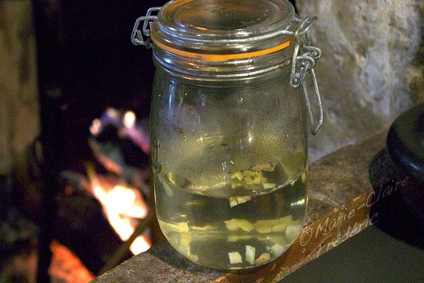 Comment faire un Ginger bug (levain de gingembre) pour fermenter jus de fruits ou de légumes ?
