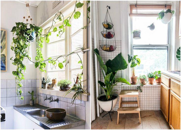 Растения как декор на кухне: подвесные кашпо и цветы в  горшках на подоконнике #растения #цвет #дом #уют #декор