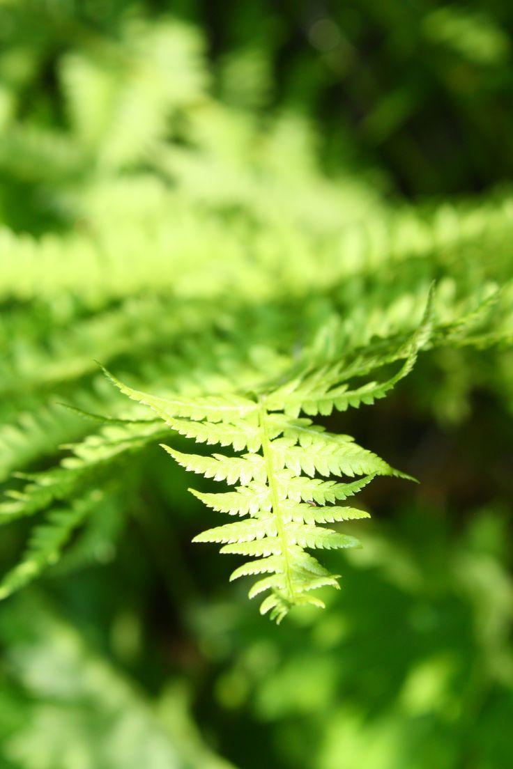 Nature: Ferns Photography, Colors Jpg, Emeralds Green, Green Green, Curls, Children, Green Life, Lush Green, Ancient Plants