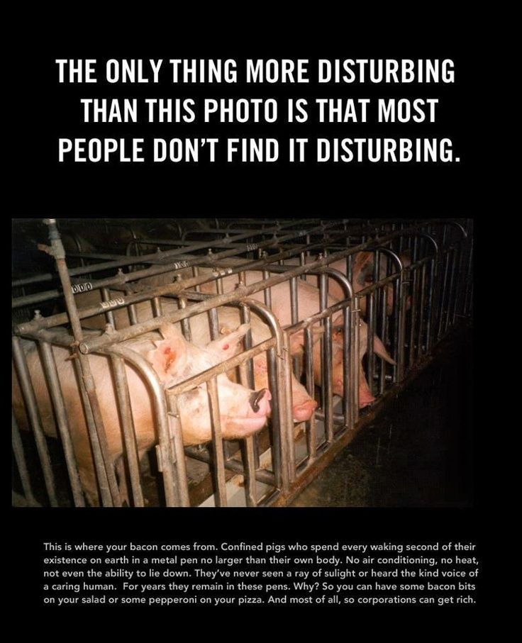 cruelty in animal farm essay Free essay: factory farming and animal cruelty animal rights are practically non-existent in many different ways today factory farming is probably the worst.