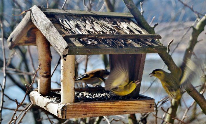 Přichází zima. Zatímco si hovíme ve svých zateplených domovech, neměli… http://www.drevostavitel.cz/clanek/ptaci-budka-a-krmitko-pro-ptaky