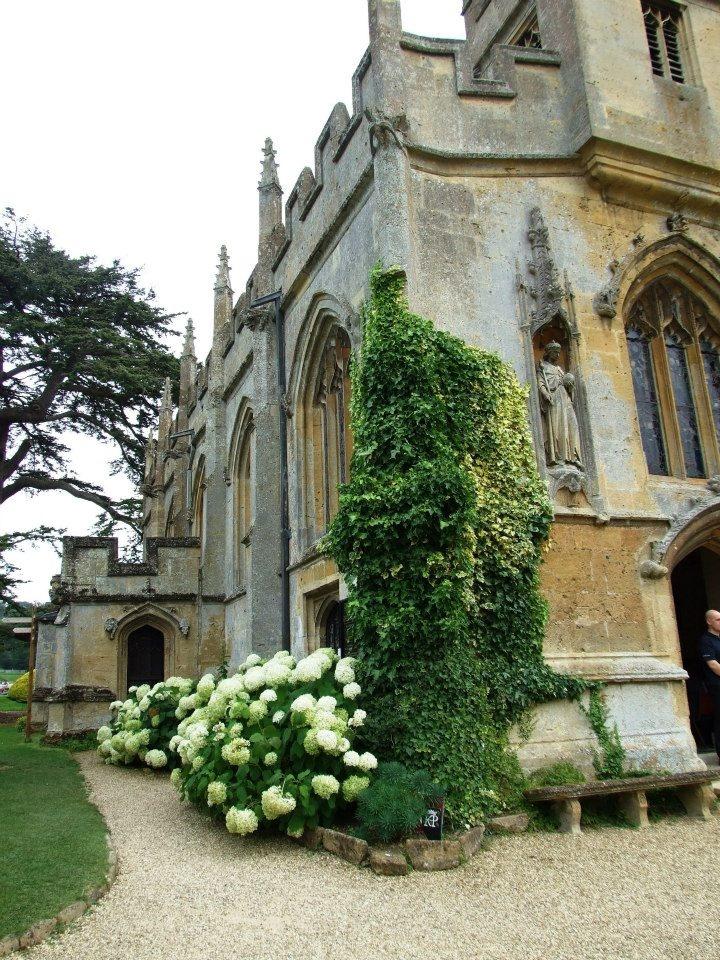 Sudeley Castle   Hydrangeas by St Mary's Church
