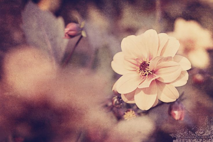 Little me vintage pinterest floral photography for Vintage style photography tumblr