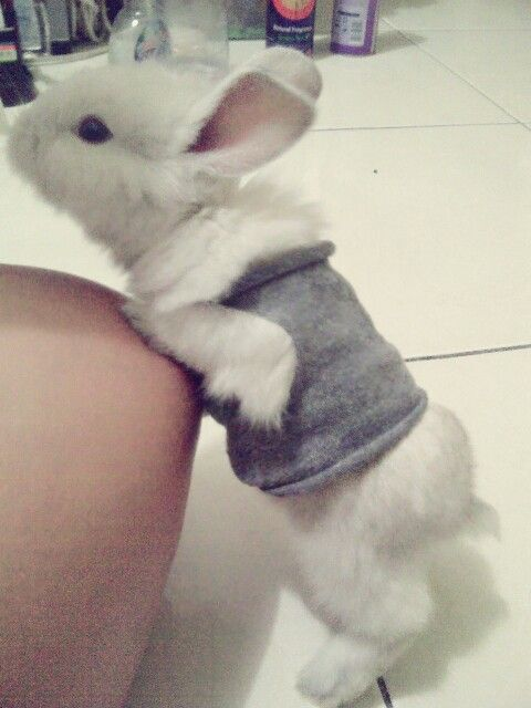 My Little snowy...T_T i will miss him....RIP i think buy with not good conditions....u.u