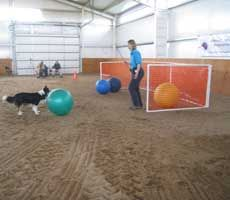 "Treibball, a herding game for dogs. Could be great if we can keep Spike from ""killing"" the balls :)"