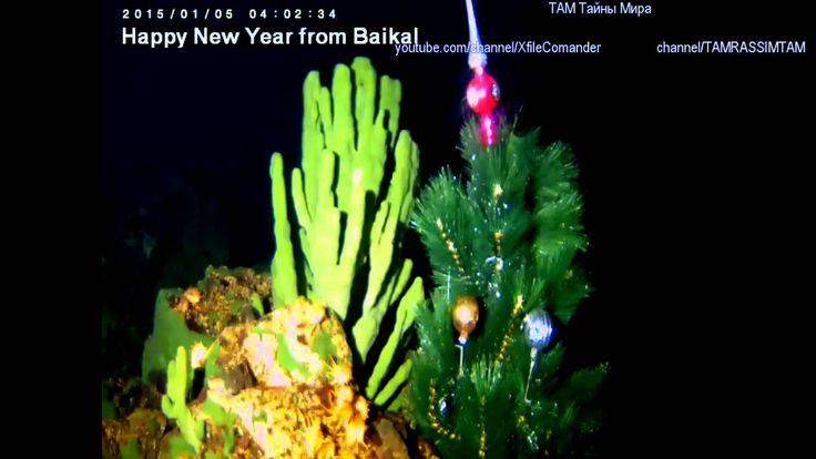 Кто обитает на дне озера Байкал, Новогодние глубины