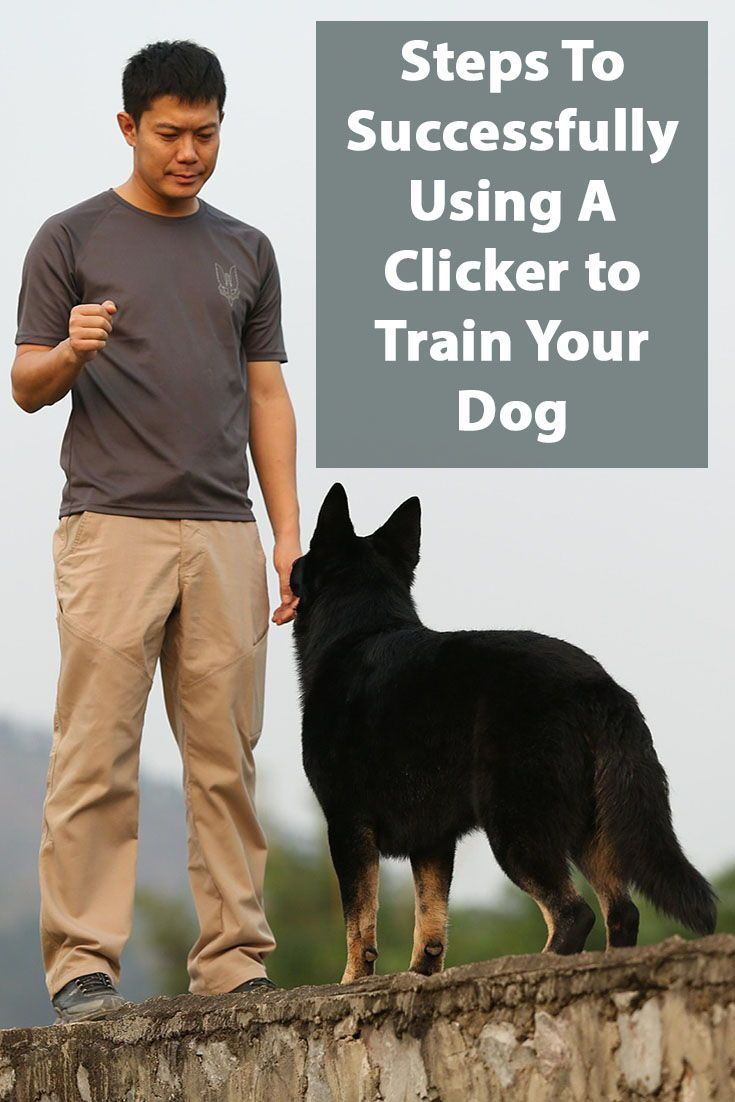 Clicker Training For Dogs Positive Reinforcement On Steroids