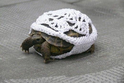 yarn bombing turtle