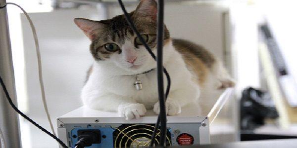 Chi non vorrebbe avere un gatto sul posto di lavoro? Starsene seduti a una scrivania mentre gli amati felini domestici si accoccolano sulle gambe non è più solo un sogno per i dipendenti della Ferray Corporation, un'azienda giapponese che si occupa di costruzione di siti web e sviluppo di applicazioni. La società ospita, infatti, nove adorabili gatti salvati, autorizzati a vagare per l'ufficio ogni giorno