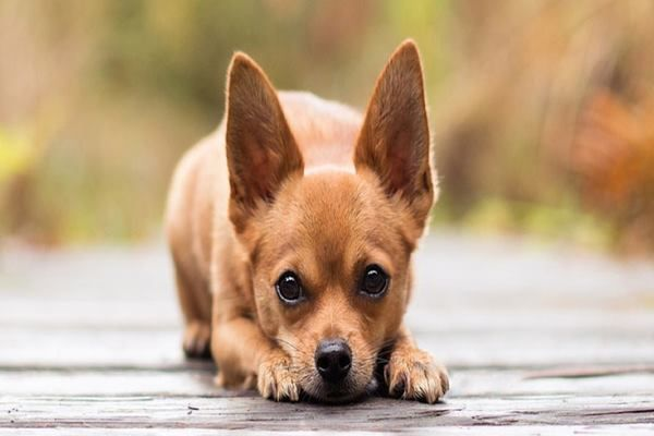 20 Cheapest Dog Breeds Which are Easy to Afford