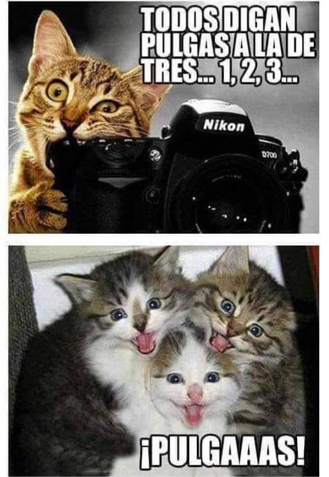 #amigos #mascotas #perros #gatos #amor #love #naturaleza #airelibre #felinos  www.tiendaonlineparaanimales.com