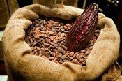 Op Chocolade Reis naar Ecuador Ontdek via deze speciale Ecuador Selectie de vele facetten die cacao uit de verschillende streken van één land biedt. 5 heerlijke, uiteenlopende repen doorheen de fruitige cacao's van Ecuador, op basis van beschikbaarheid. € 25,00- CHOQOA - ORIGINE CHOCOLADE SHOP