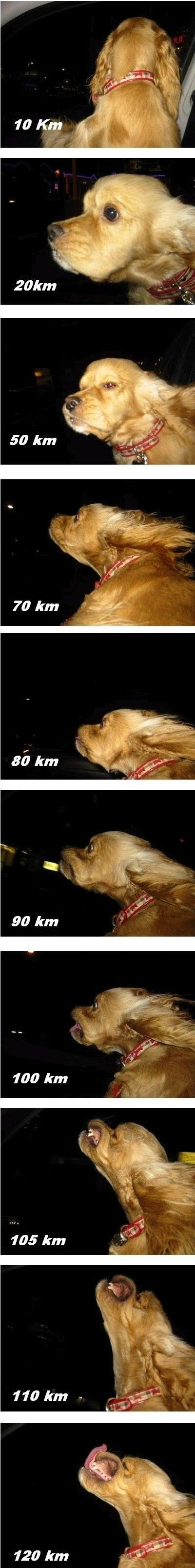 Photos of a dog sticking its head out the car window at increasing speeds