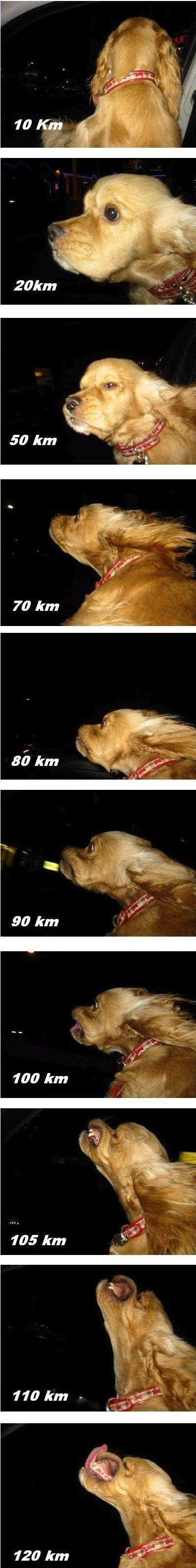 Dog out the window hahahaha