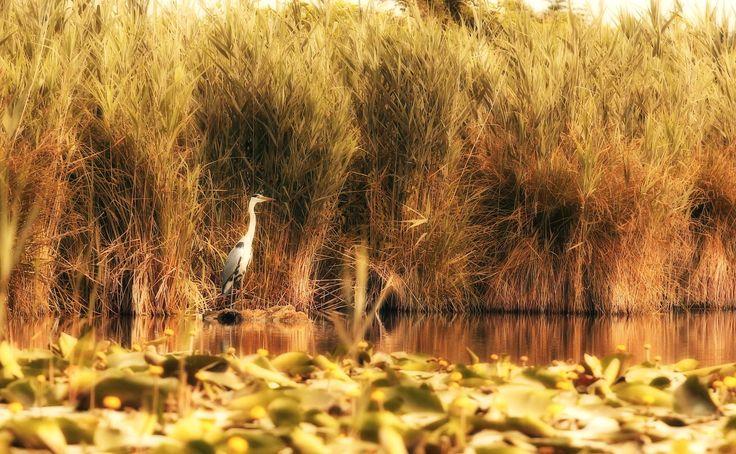 Abitanti onorari del Lago di Garda, sul fiume #Mincio (emissario del #LagoDiGarda). Conoscete il nome dell'emissario del nostro splendido lago? [foto Roberto Domenichini] #VisitLagoDiGarda #LakeGarda #VisitLakeGarda