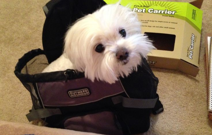 Mookeys front pet carrier