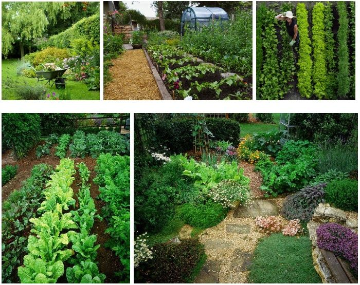 Permaculture permaculture dreaming in permaculture for Permaculture garden designs
