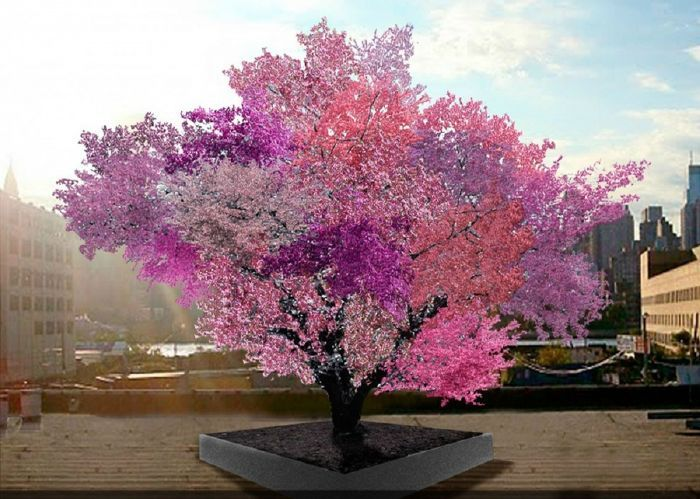 A világ 15 leggyönyörűbb fája