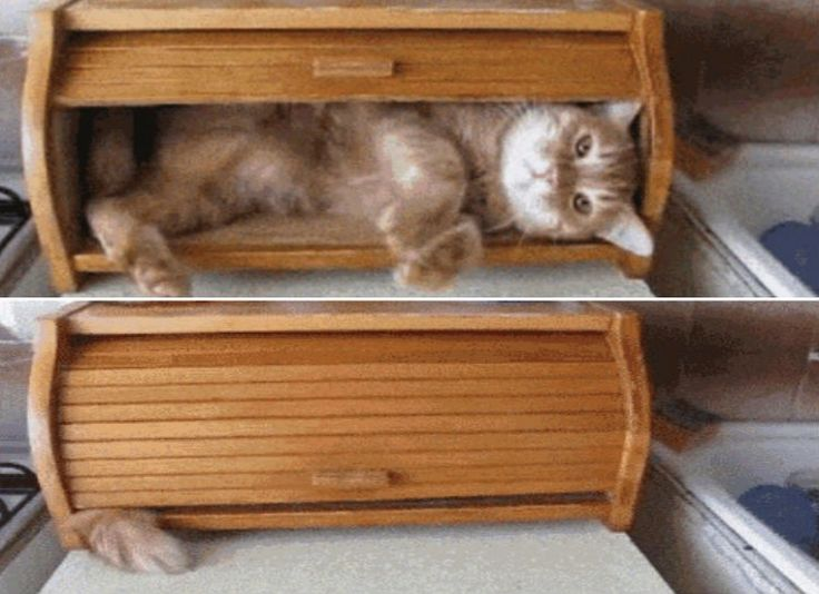 Cat In A Bread Box 20 Best Gatos Images On Pinterest  Funny Cats Cute Kittens And