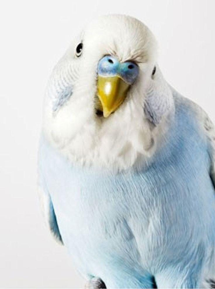 ZEUS!!!!!!!!!! Except this is not him because zeus is way more cool and this bird is indeed not! I LOVE ZEUSSSSS:D