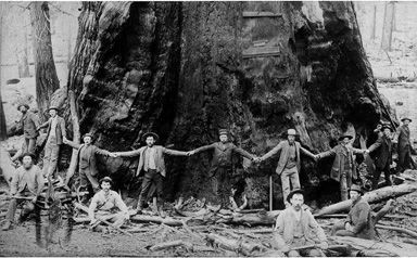 Men encircling large tree, probably Pacific Northwest. WoW how awesome was that.....too bad it got cut down