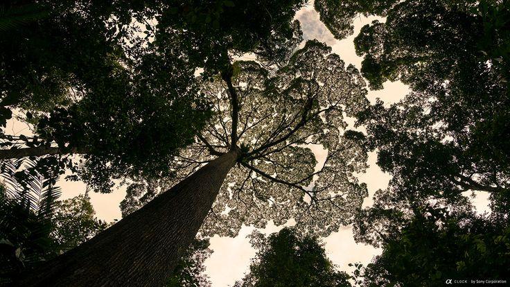 Sony Global - α CLOCK: world time, captured by α, Kinabalu Park