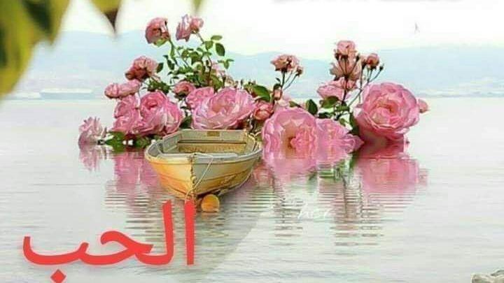 رسائل مساء الحب لحبيبي 20 رسالة غرام وشوق Floral Flowers Floral Rings
