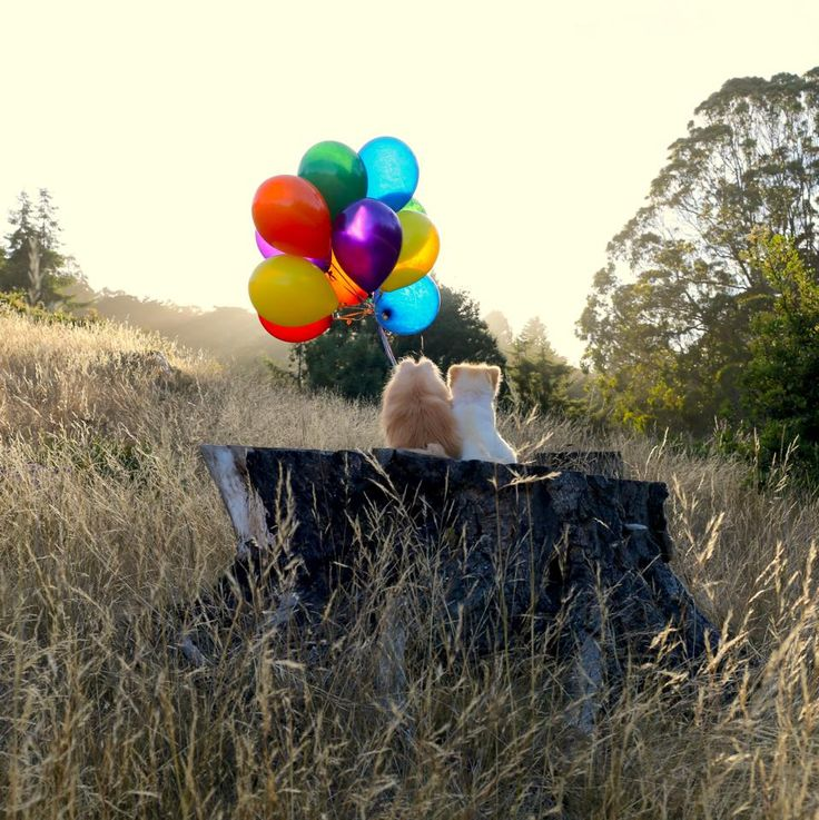 Aww what a sweet pic of Boo and Buddy. And, Happy 11th Birthday Buddy!!