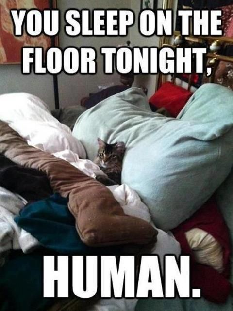 Sleep on the floor human!: Cat Beds, Dogs, Funny Pictures, Funny Cat, Funny Stuff, Funnycat, Sleep, Funny Memes, Animal