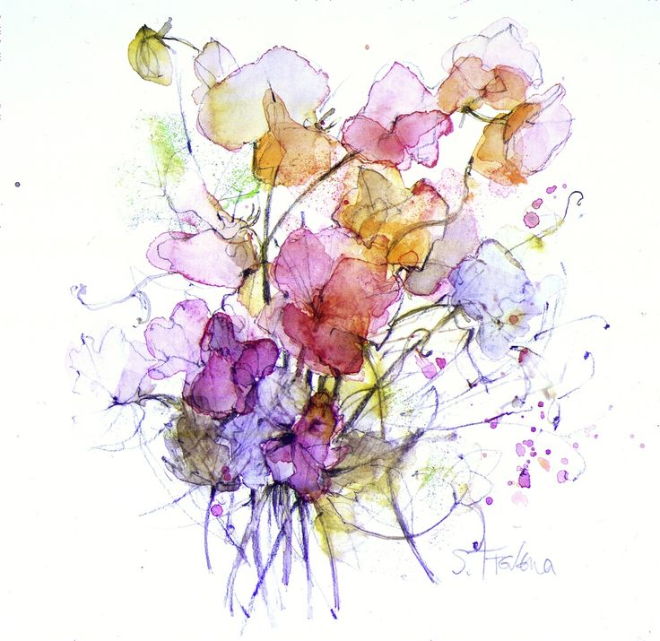 Shirley Trevena - Sweet Peas - Watercolour & Pencil 17 x 15 cm