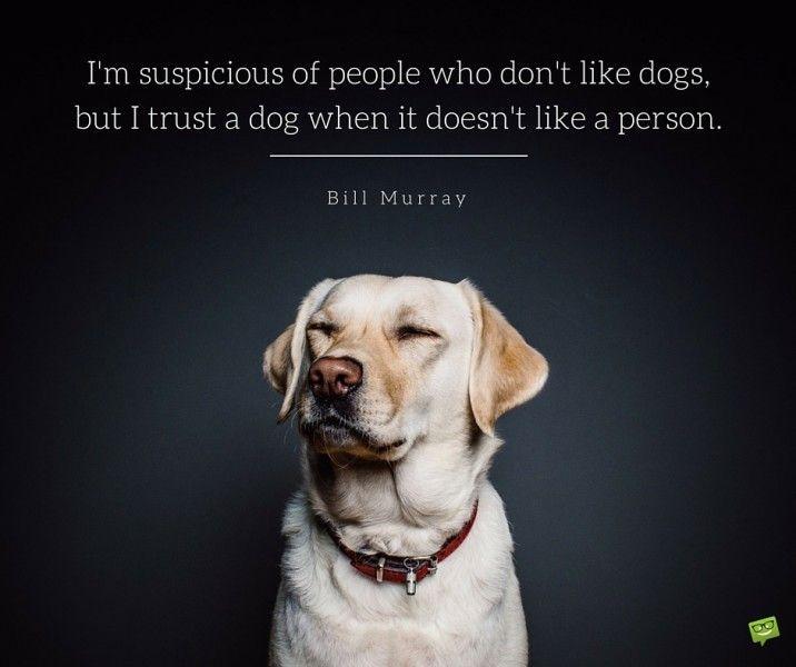Dogs Trust Fun Day